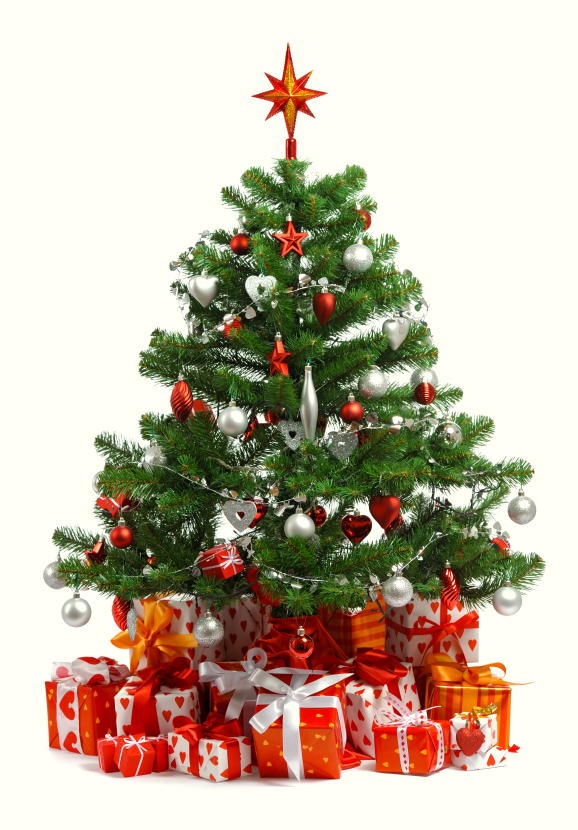 Bugs In Christmas Trees.Are There Bugs In My Christmas Tree Home Pest Control