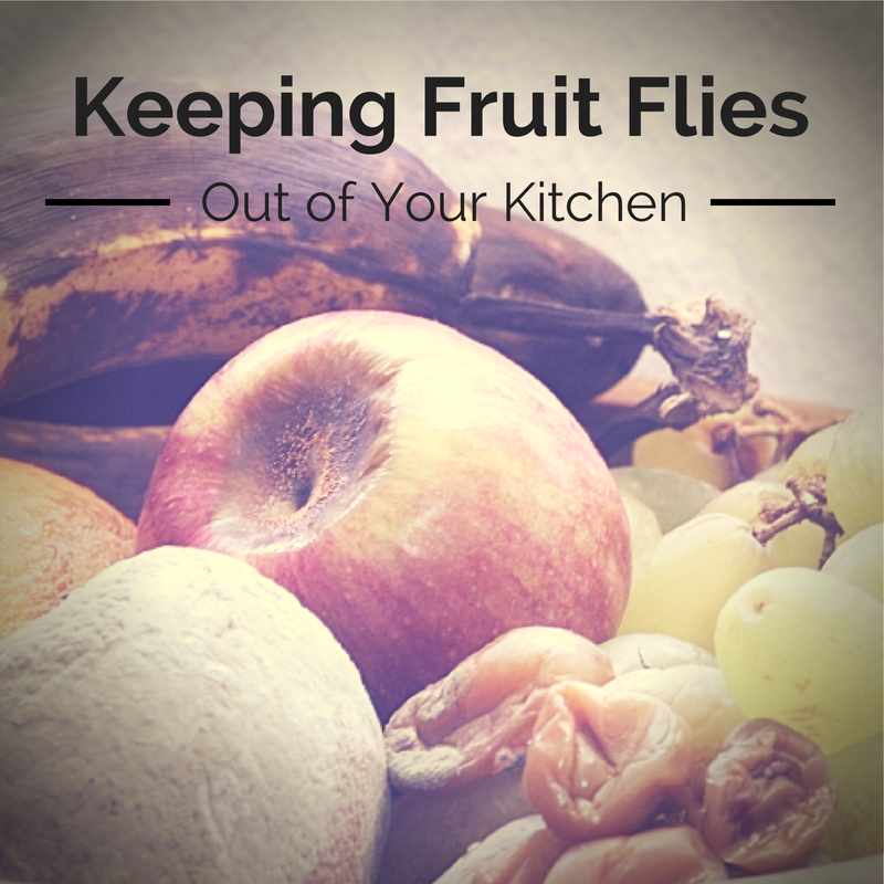 Dealing With A Fruit Fly Invasion